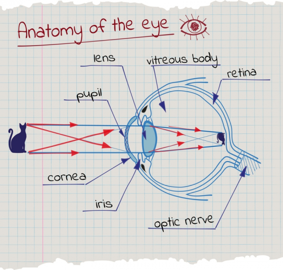 Descărcați o diagramă de testare a ochilor - Miopie September