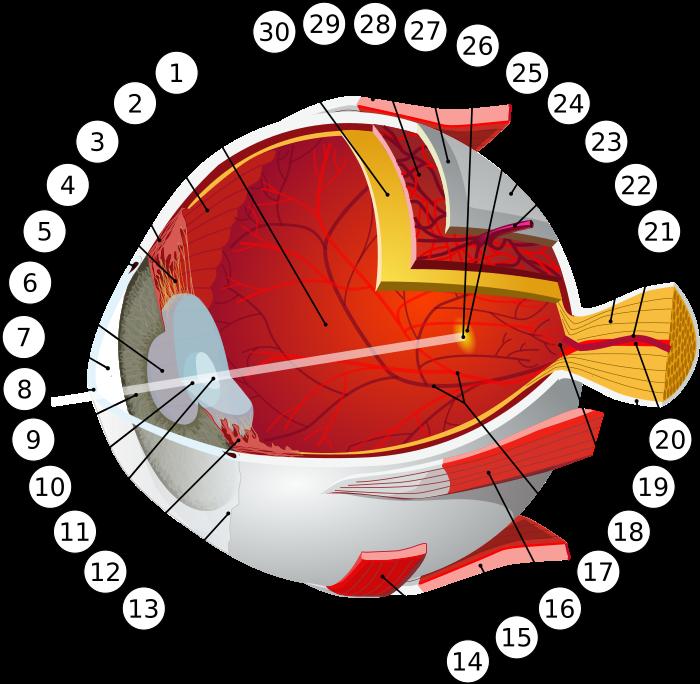 viziune 0 8 hipermetropie
