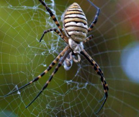 pânză de păianjen pentru vedere normele de vârstă ale acuității vizuale