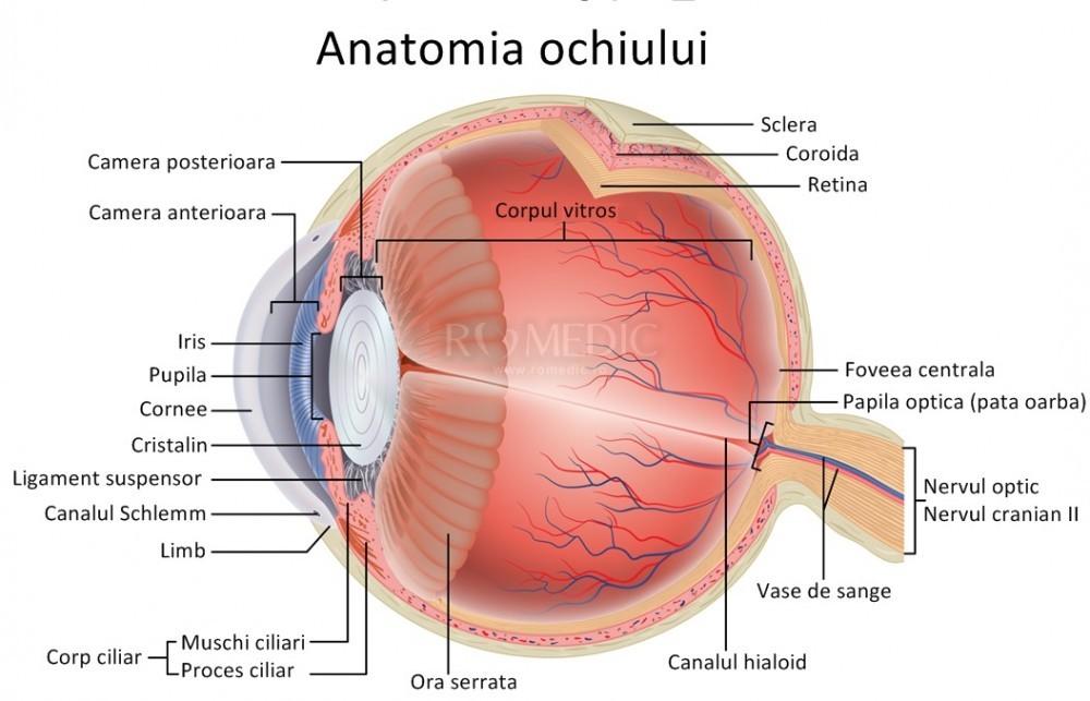 Exercitii pentru imbunatatirea vederii fara ajutorul ochelarilor – Oftamed Alba Iulia