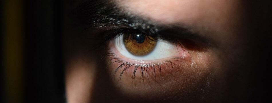 vederea ochilor la prădători