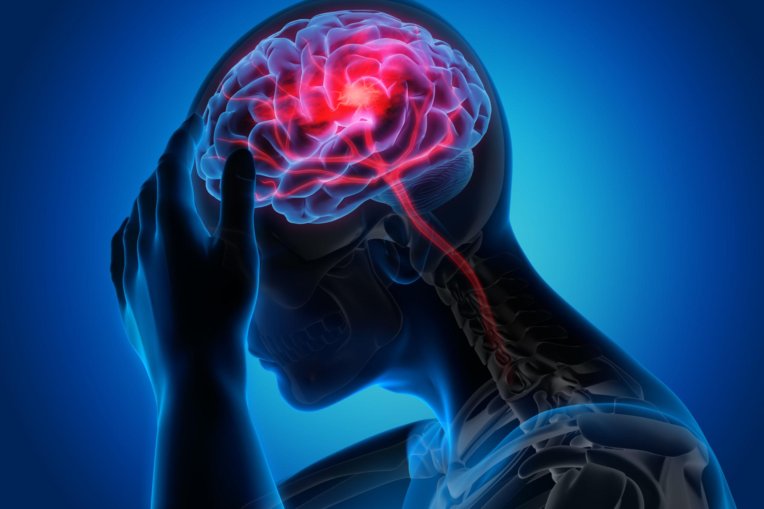timpul de vedere către creier