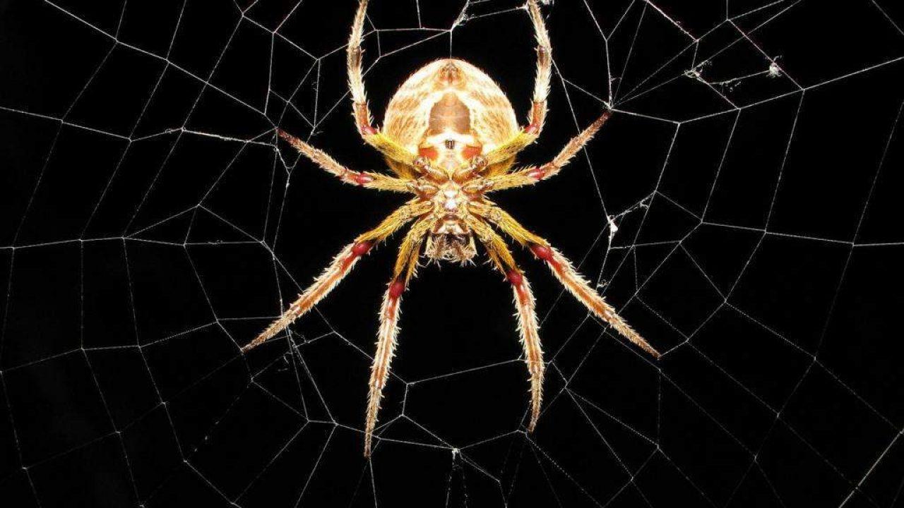păianjeni pentru vedere