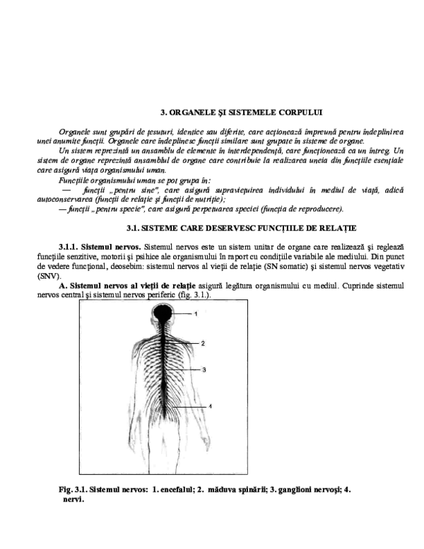 Piele (anatomie) - Wikipedia