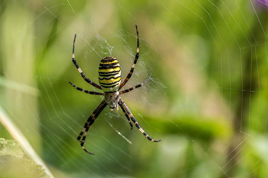 pânză de păianjen pentru vedere acuitatea vizuală pentru lucrul în instalații electrice