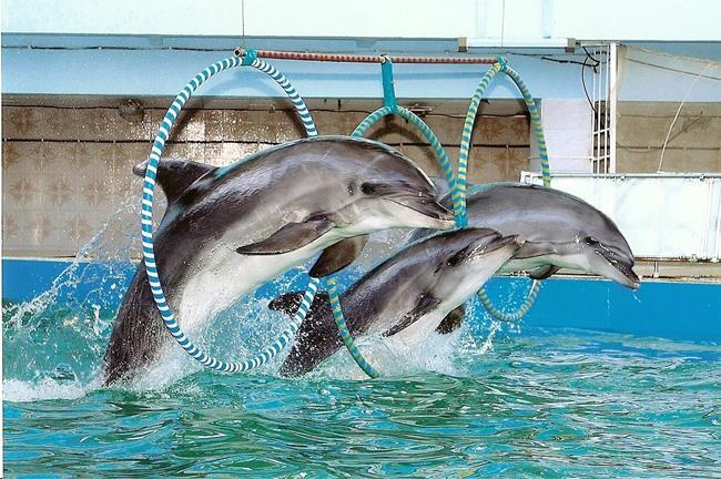 Tipuri de nume de delfini. Delfin marea neagră