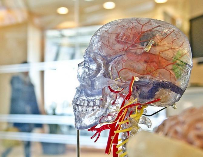 modul în care creierul procesează vederea vindecat hipermetropie