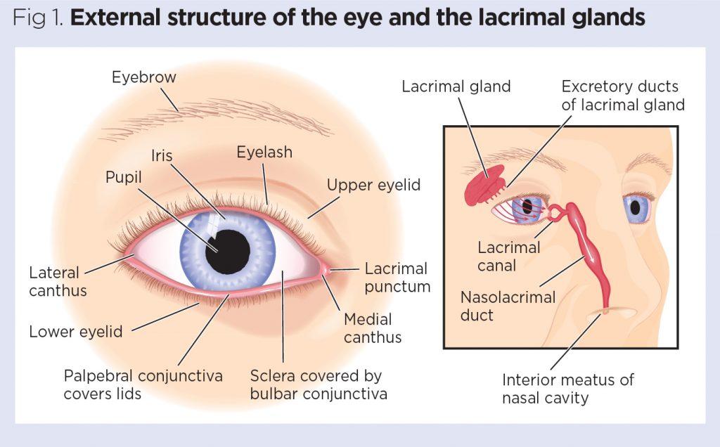 test ocular aspect fericit