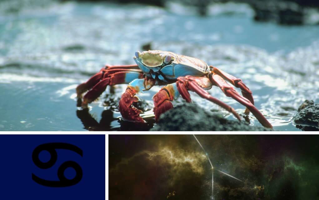 viziunea crabului metoda de îmbunătățire a descărcării vederii