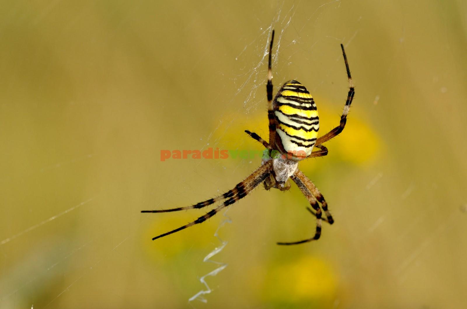 pânză de păianjen pentru vedere carte va vedea