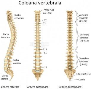 Durerea cervicală - durere de spate în regiunea gâtului