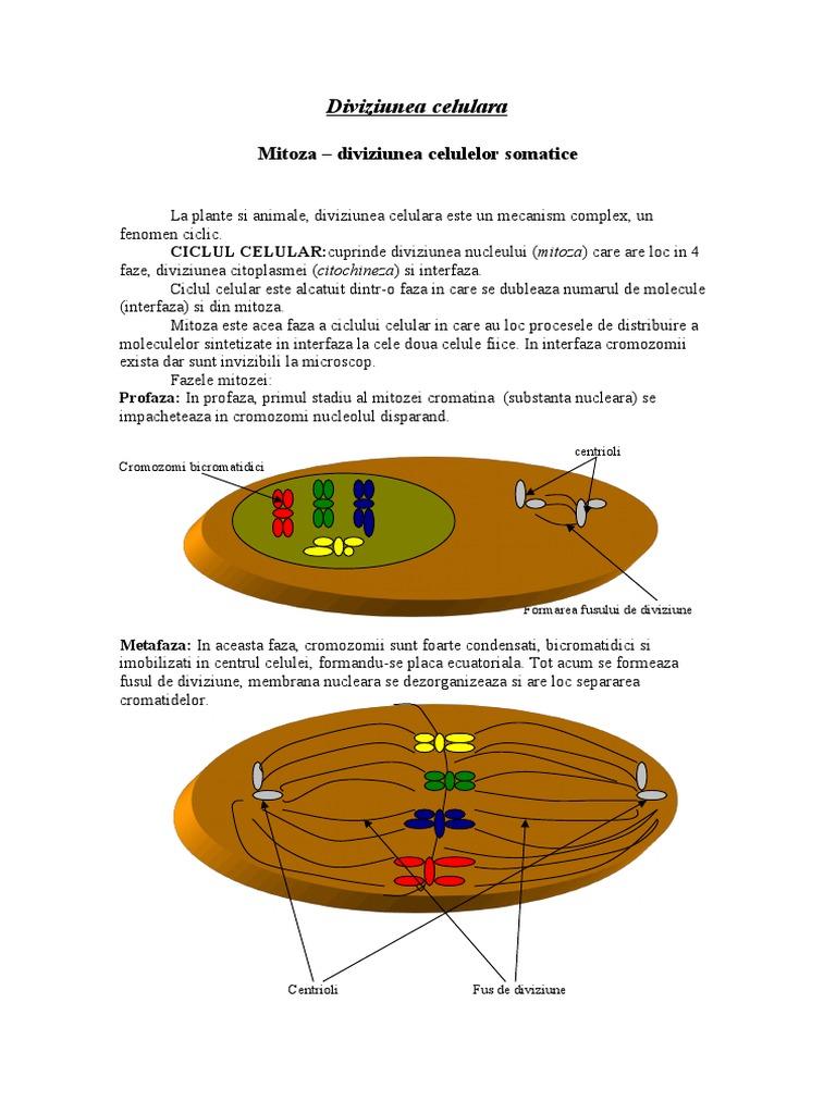 Diviziunea celulara - mitoza si meioza
