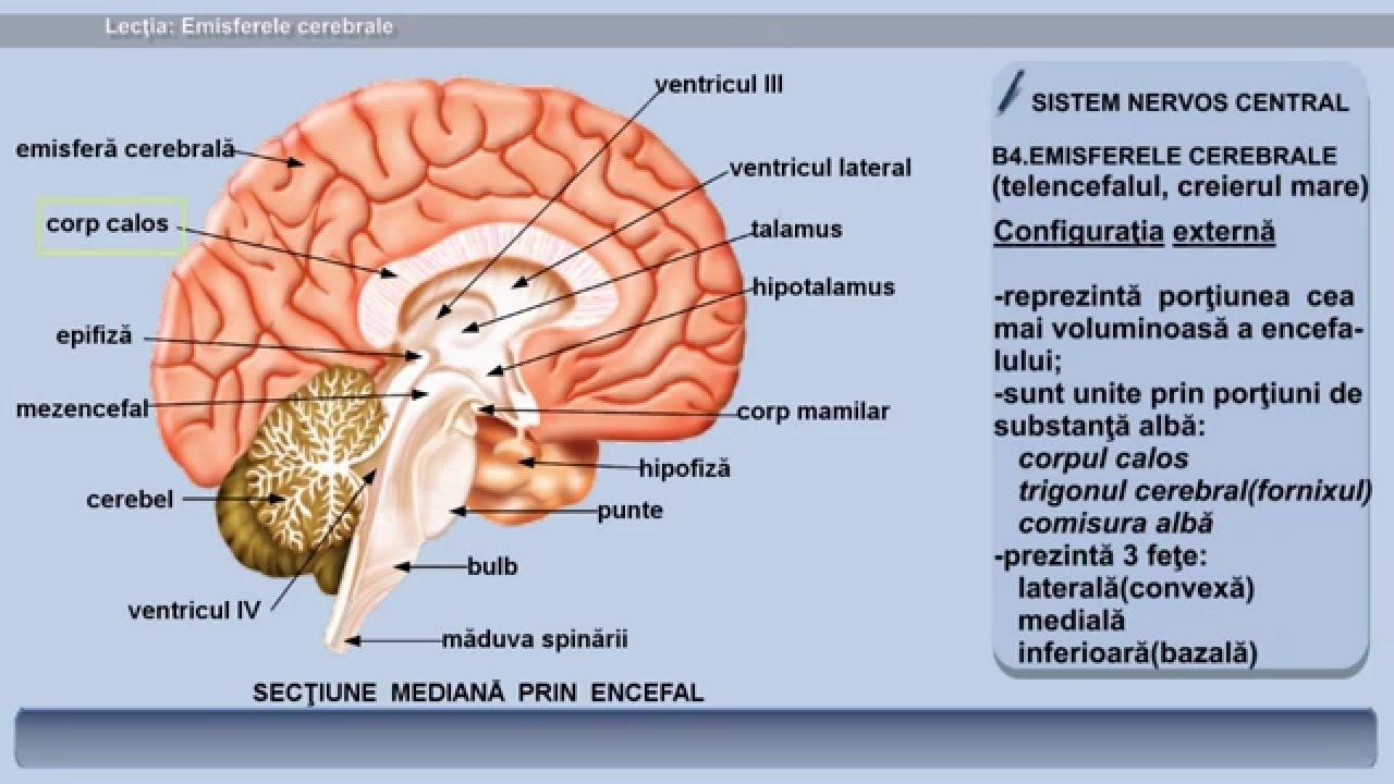 vedere și SNC cerebral