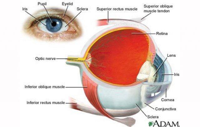 Şi-ar fi putut pierde complet vederea dacă nu ar fi fost operat din nou | 7-pitici.ro