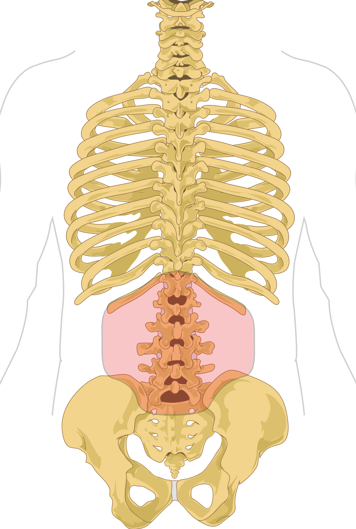 care vertebre cervicale sunt responsabile de vedere