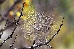 pânză de păianjen pentru vedere picurați atunci când verificați vederea