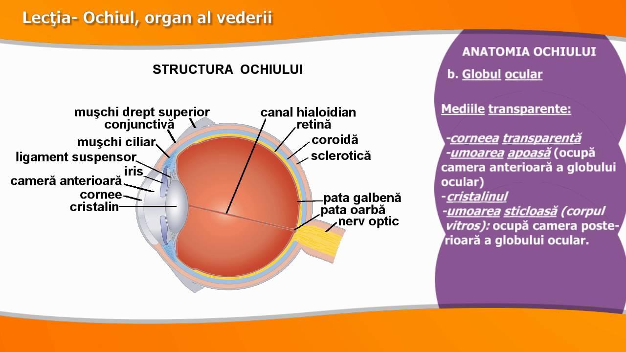 boala ochilor de culori diferite
