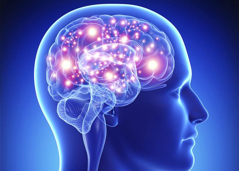 Ce parte a creierului este responsabilă de vedere și auz