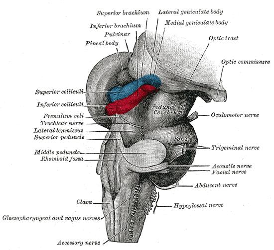 Sistemul nervos central