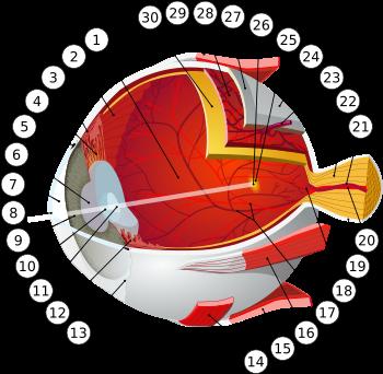antrenament pentru ochi cum să recâștigi vederea