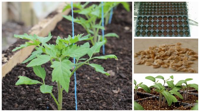 10+ Best Idei de încercat images | idei, aranjarea grădinei de legume, grădina de legume