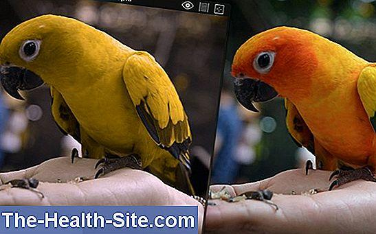 Test de orbire a culorilor și diagnostic - Sănătate -