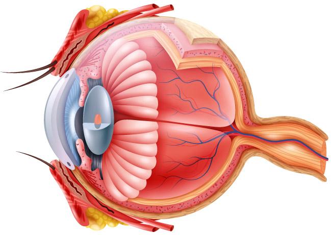 cum se restabilește vederea după vârstă