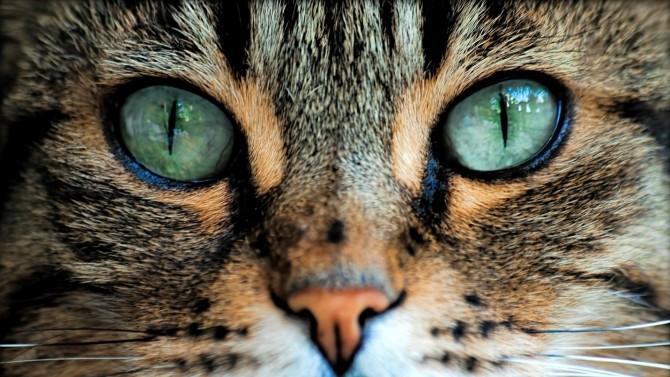este posibilă vederea vindeca minus vederea