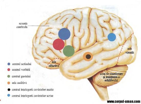 partea creierului responsabilă de vedere corectarea vederii cu ajutorul ochelarilor