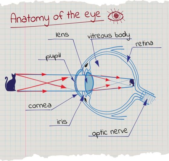 funcția de deficiență a vederii