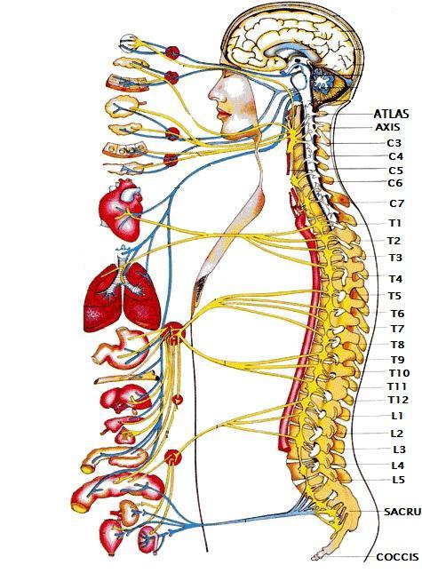 osteopatii tratează vederea