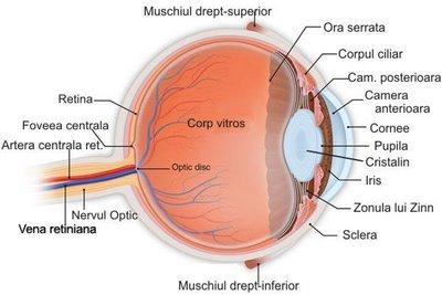 protejează vederea umană