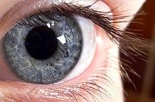 hipermetropie proeminentă aloe pentru a restabili vederea