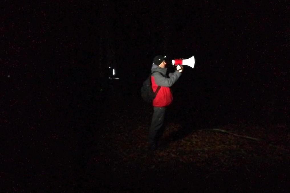 vederea elanilor în noapte