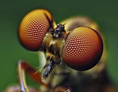 Japonia, natural, insectă, libelulă, viteza yanmar, argint 蜻 蜓