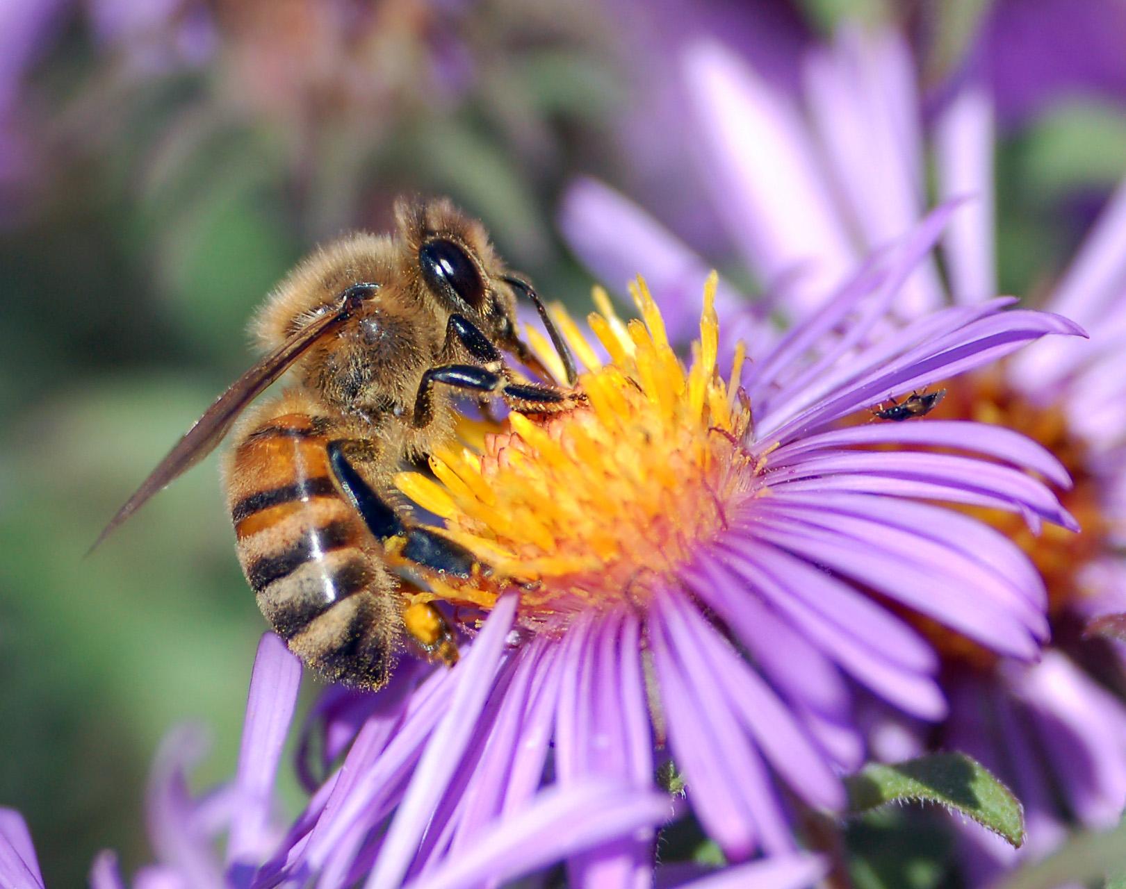 viziunea polenului albinelor miopie ce este greutatea