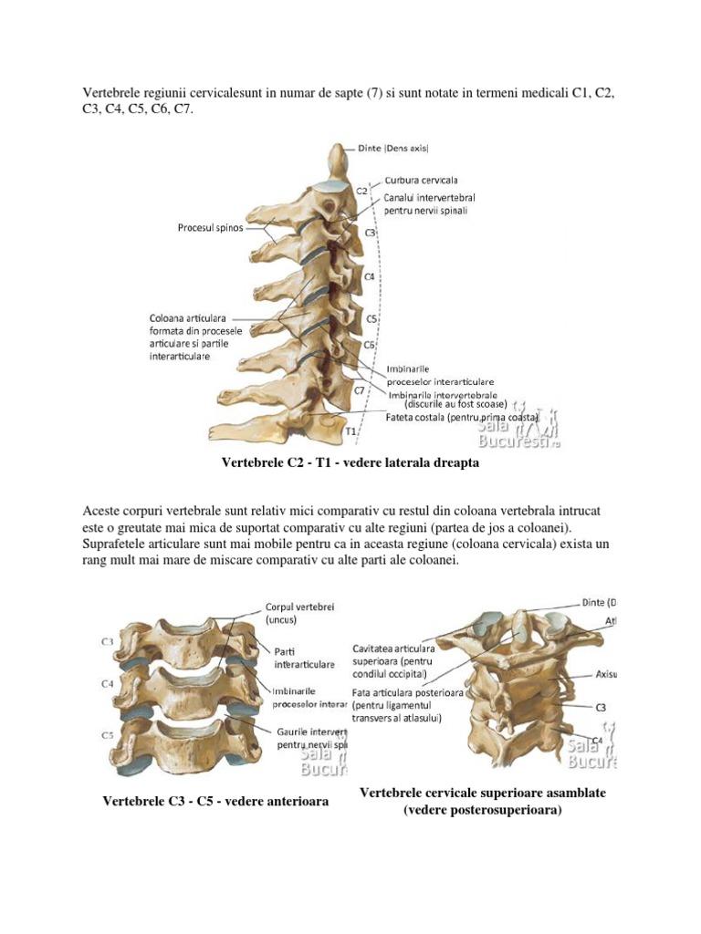 vertebre și vedere