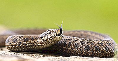 șarpe pentru vedere