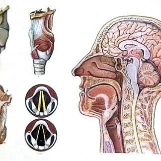 anatomie de lectură a organului vederii castraveți și vedere