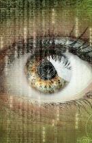 Topul plantelor benefice pentru sănătatea ochilor