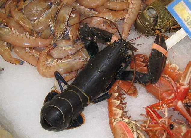 ochi vedere crustacee masa de testare cu ochiul liber