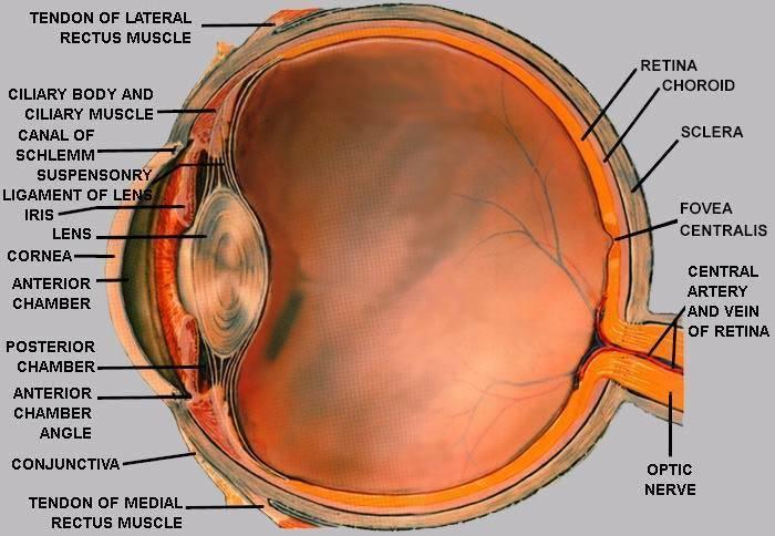 Metoda de restaurare a vederii Betz picăturile de ochi scad acuitatea vizuală