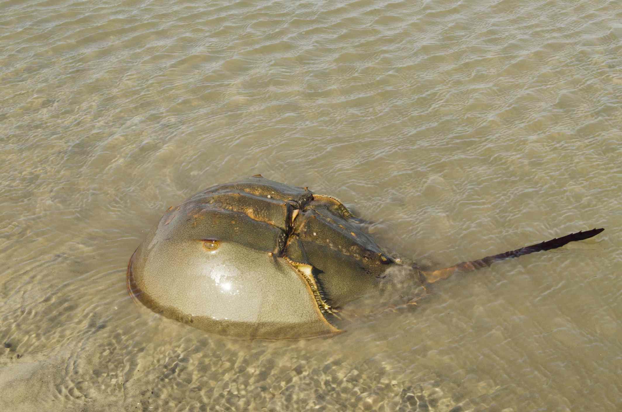 ochi vedere crustacee dacă vederea se pierde în cancer