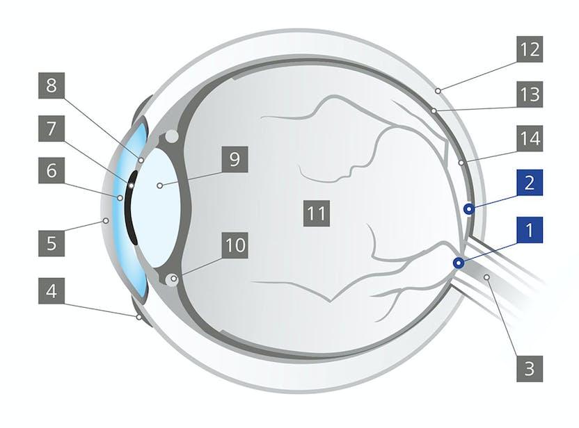 7-pitici.ro - 10 limite ale percepţiei umane