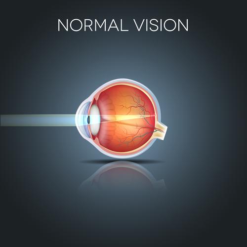 restabiliți etapele vederii